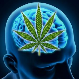 cannabis domain names